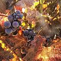 Autumn In The Vineyard by Michele Steffey
