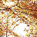Autumn Leaves by Blink Images