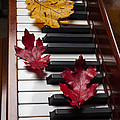 Autumn Leaves On Piano by Garry Gay