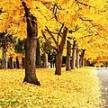 Autumn Perspective by Carol Groenen