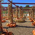 AUtumn Pumpkin Patch Print by Joann Vitali