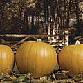 Autumn Pumpkins by Amanda And Christopher Elwell