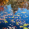 Autumn Reflections Print by Bill  Wakeley
