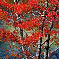 Autumn Reflections by Janine Riley