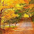 Autumn Road Home by Terri Gostola