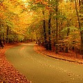 Autumn Serenity - Holmdel Park  by Angie Tirado