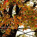 Autumn Smile by Jaime Lind