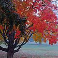 Autumn Splendor by Lisa Phillips