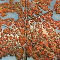 Autumn Tree by Michael Anthony Edwards