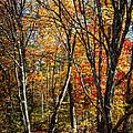 Autumn Trees by Elena Elisseeva