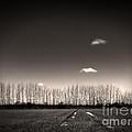 Autumn Trees by Stelios Kleanthous