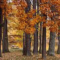 Autumn View by Sandy Keeton