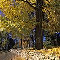 Autumn Wall - Fm000082 by Daniel Dempster