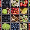 Autumnal Harvest by Tim Gainey