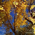 Autumns Reflections by Steven Milner