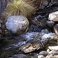 Babbling Brook by Barbara Snyder