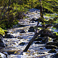 Babbling Brook by Bill Cannon