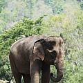 Baby Elephant Chiang Mai, Thailand by Stuart Corlett