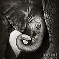 Baby Elephant Seeking Comfort by Johan Swanepoel