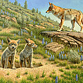 Babysitter  -  Coyotes by Paul Krapf