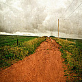 Back Country Road PEI Print by Edward Fielding