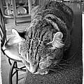 Bad Cat by Susan Leggett