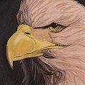 Bald Eagle Print by Wil Golden