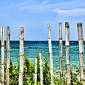 Bamboo Fence Print by Keith Ducker