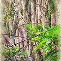 Bamboo Forest At Lamma Island Hong Kong by Yury Malkov