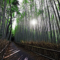 Bamboo Forest Path Of Kyoto by Daniel Hagerman