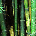 Bamboo Graffiti Pano - Sichuan Province Print by Anna Lisa Yoder