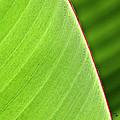 Banana Leaf by Heiko Koehrer-Wagner