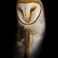Barn Owl by Bill Wakeley