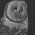 Barn Owl by Lawrence Tripoli