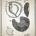 Baseball Glove Patent by Digital Reproductions