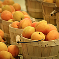 Baskets Of Apricots by Julie Palencia