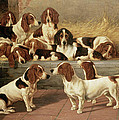 Basset Hounds In A Kennel by VT Garland