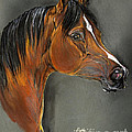 Bay Horse Portrait by Angel  Tarantella