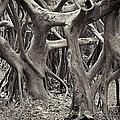Baynan Roots by Rudy Umans