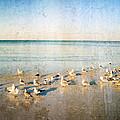 Beach Combers - Seagull Art by Sharon Cummings Print by Sharon Cummings