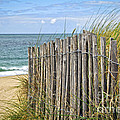 Beach Fence by Elena Elisseeva