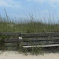 Beach Grass and Bench  Poster by Cathy Lindsey