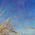 Beach Grass In The Wind by Michelle Calkins