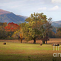 Beautiful Cades Cove by Lena Auxier