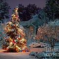 Beautiful Christmas Tree Lights by Boon Mee