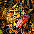 Beautiful Fall Color by Meirion Matthias