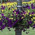Beautiful Hanging Flowers by Sabrina L Ryan