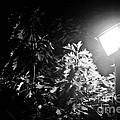 Beautiful Lamp Light In The Dark by Fatemeh Azadbakht
