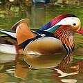 Beauty In The Pond by Ayse Deniz