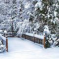 Beauty Of Winter by Kathy Jennings